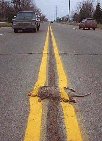 OMG! Roadkill suprise
