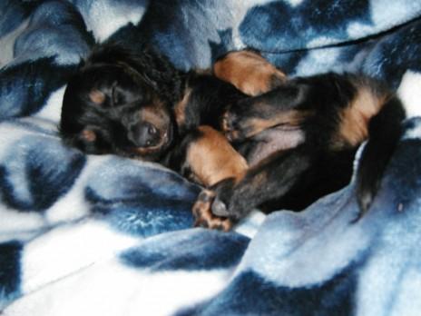 :3 mah puppy :3