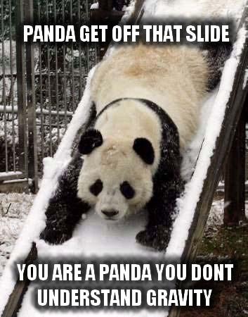 Kungfu Gerbil > Panda's