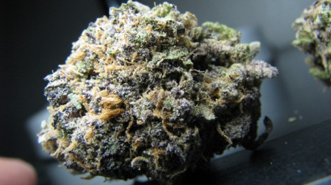 Marijuana Pic of tha Day