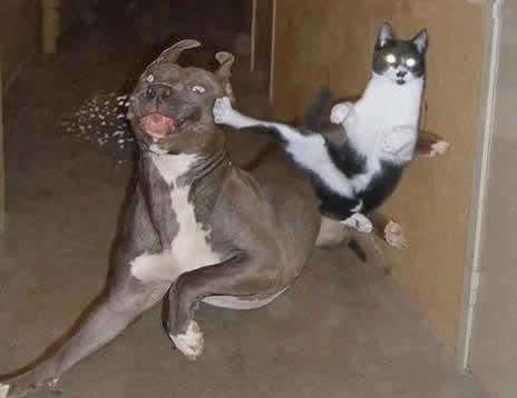 Might Guy Cat.
