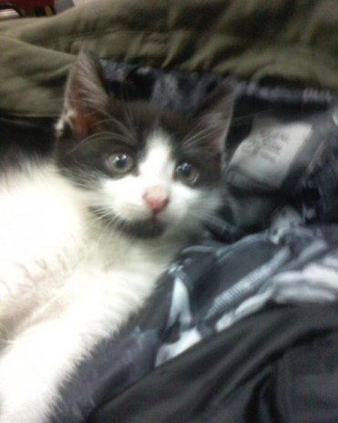 i got a kitty cat