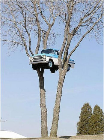 very important news car stuck on tree