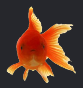 I am goldfish trainer and so can you!