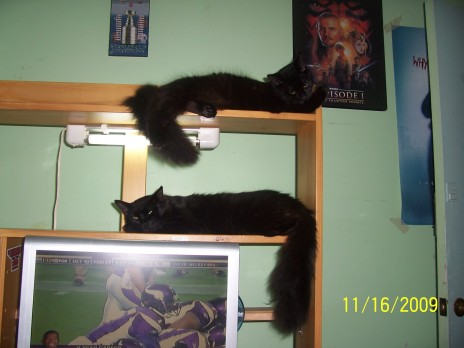 Bunk bed kitty's.