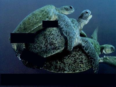 sexy turtles