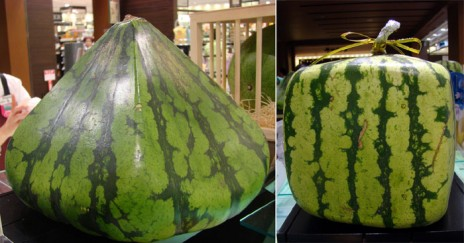 Watermelon Win!