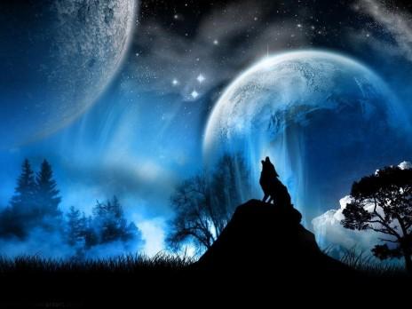 Wolf Fanatic