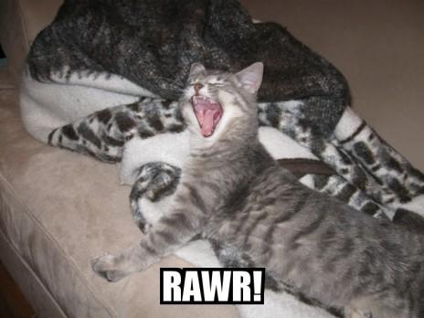 KITTY RAWR!!!