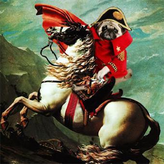 The revenge of the pug!