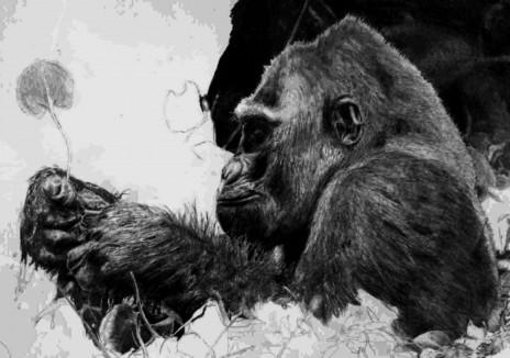 Gorillas.