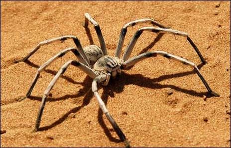 my pet spider 2