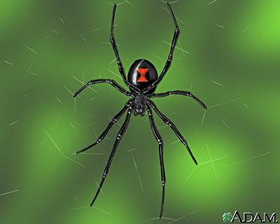 my spider pet 3