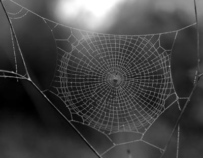 my pet spiders web