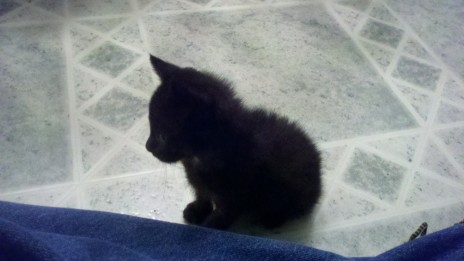 The other kitty my sister fostered a while back