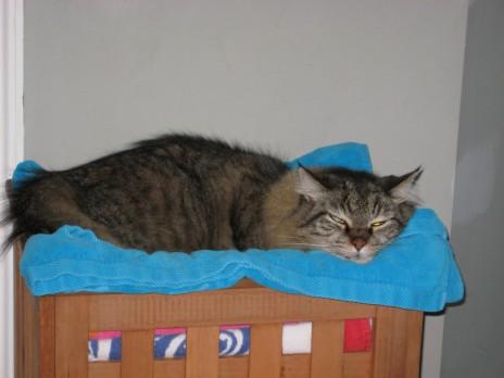 My (permanent) cat