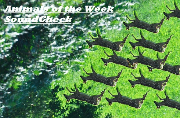 Animals of the Week has been relased