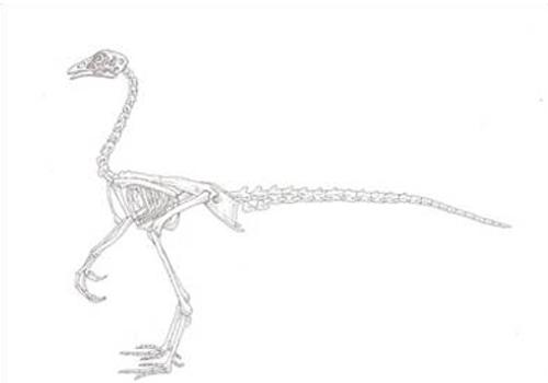 Chickenosaurus????