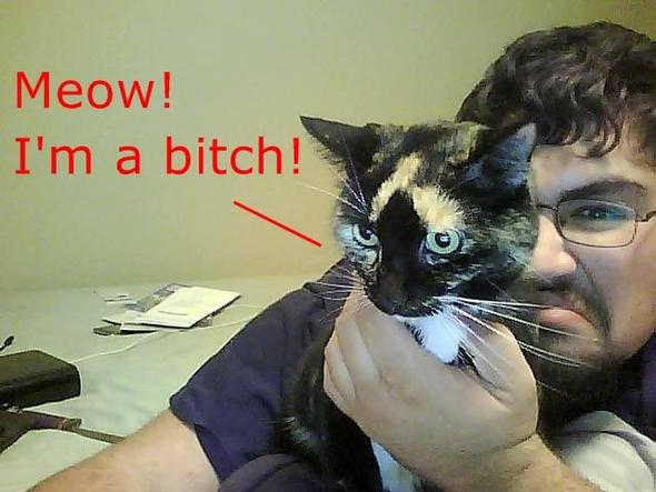 My damn crazy kitty!