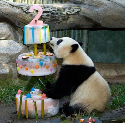 it's my birthday XDDDD :OOOOOO