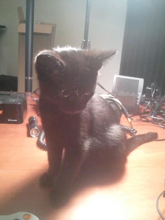 I got a new kitten!