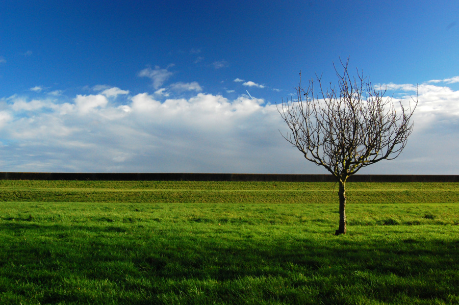 Tree on the right, set on a background of grass and the sky