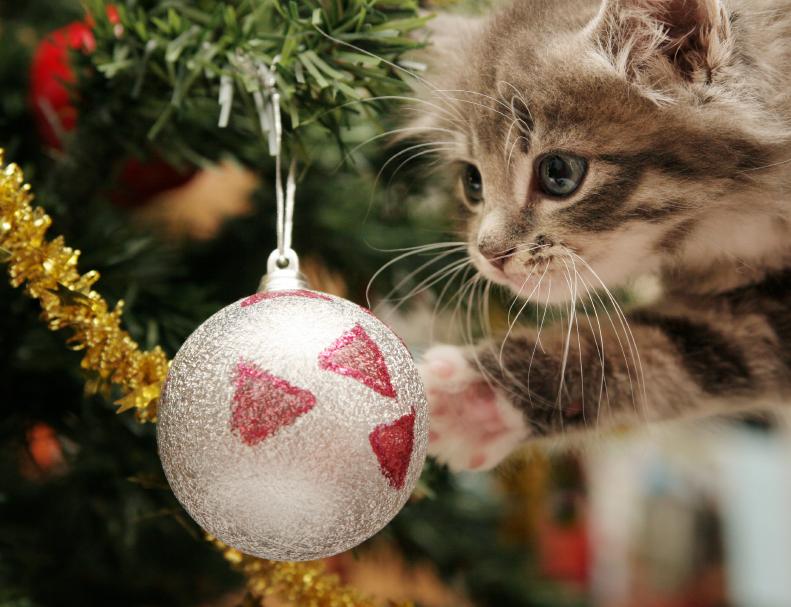 4118967_141852172013_kitten_with_tree.jpg