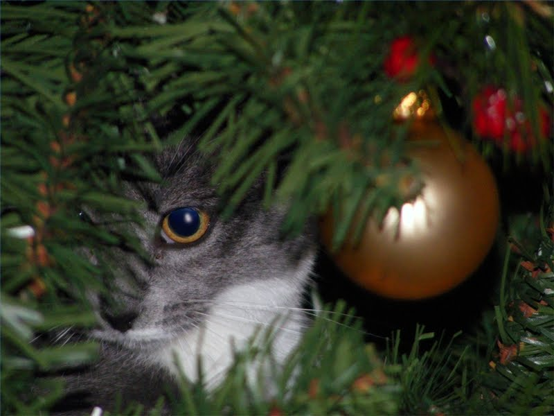 4118967_141852174392_christmas-tree-cat.jpg