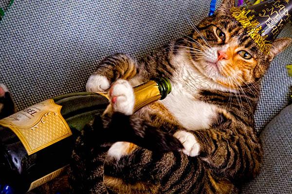 4118967_142017703341_happy-new-years-cat.jpg