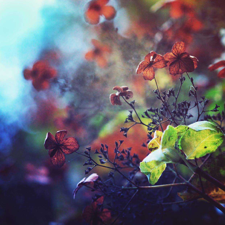 Petite Little Flowers