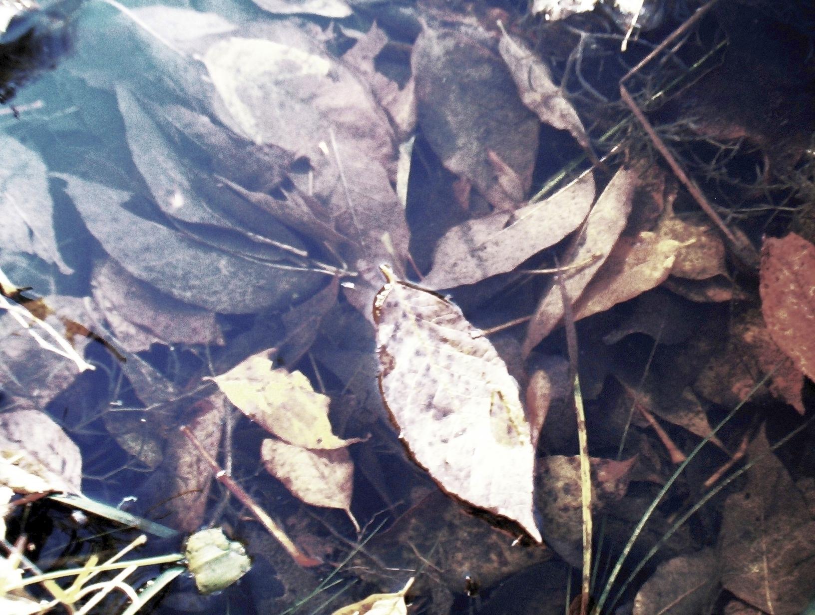 3030020_142204493041_leaf.jpg