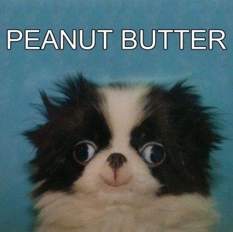 4118967_142526024681_peanut-butter-derp-dog.jpg