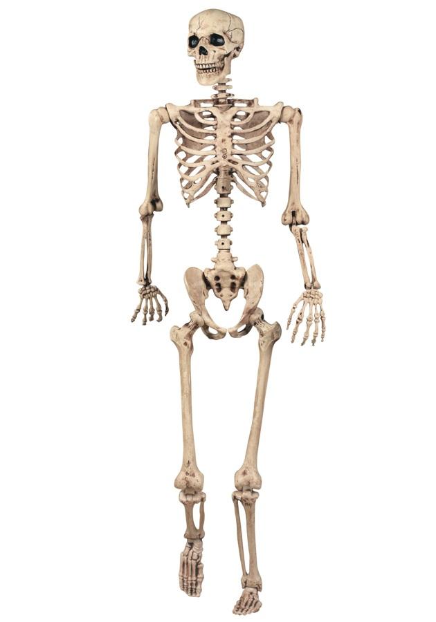 5484227_143986792531_skeleton-03.jpg