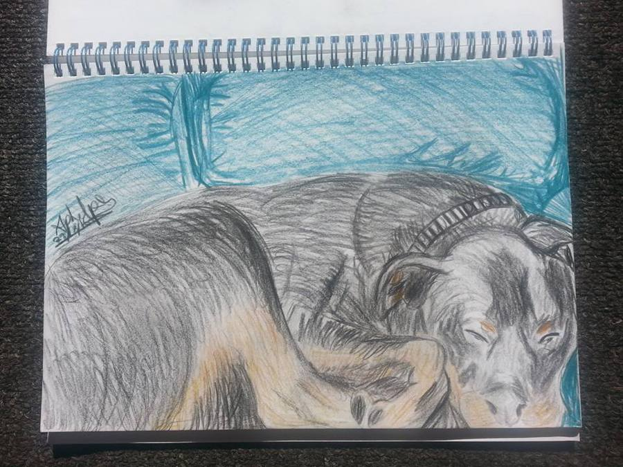 my dog life drawing by april phelps