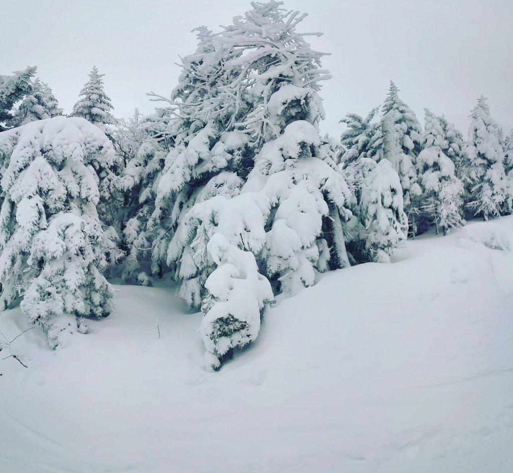 4374102_148202401212_winter02.jpg
