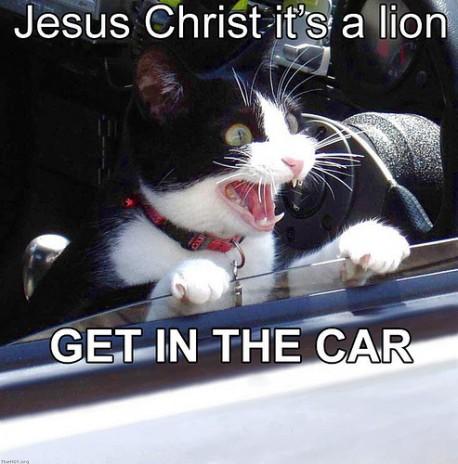 LOL cat#2