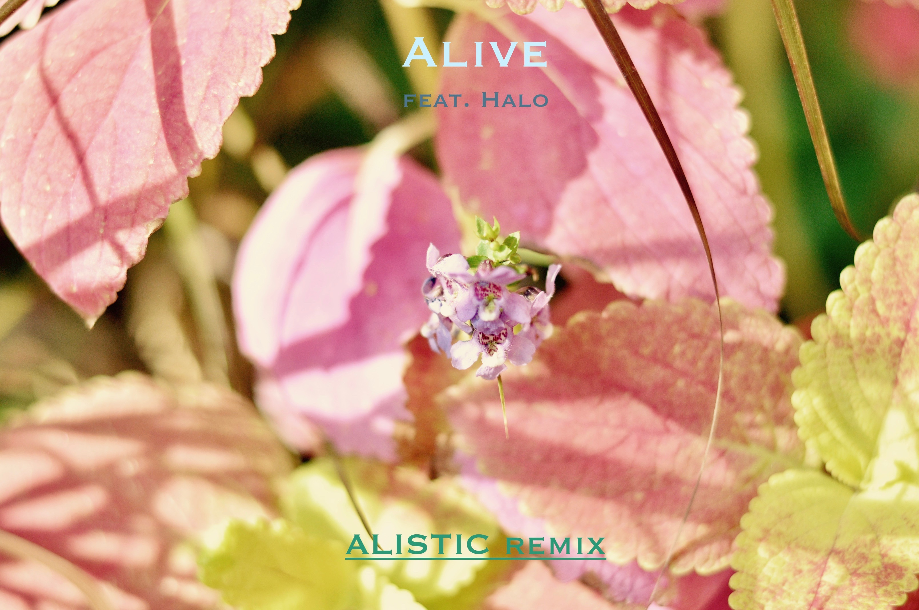 6431548_151152839151_Alivecover.jpg