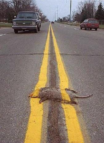 OMG! Roadkill suprise