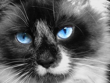 Kitty Krew Will Live!!!