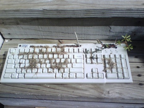 The Keyboard Garden is Dead.