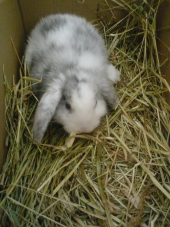 My little rabbit