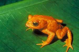 Amphibian extinction rate over 20 years