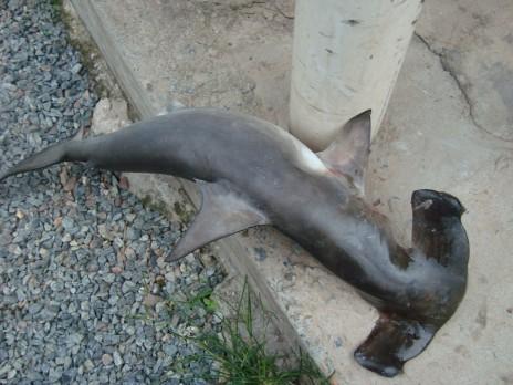Shark!!!!!!!!!!!!