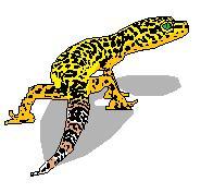 Leopard gecko care?