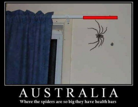 Giant scary spiders memes - photo#48