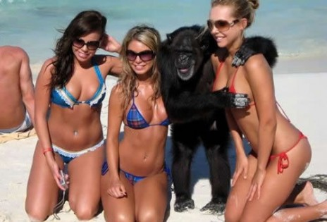 Monkey Is A Playa'