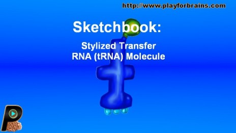 Sketchbook : Stylized Transfer RNA (tRNA) Molecule
