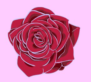 Rose for Mothers Day