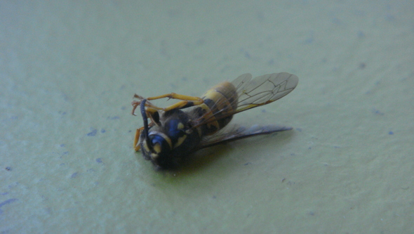 This is Bees