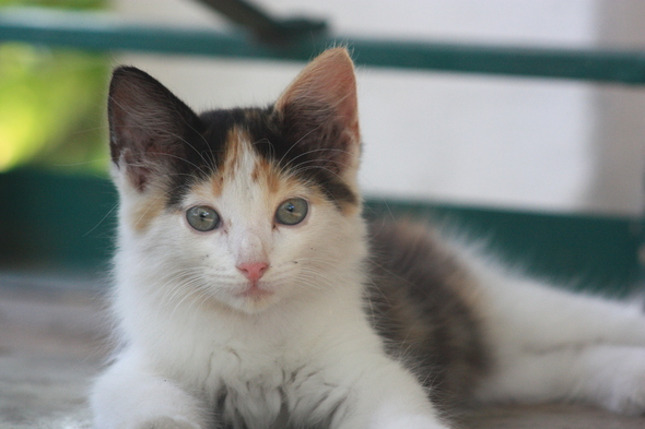 The Story of Calico continued